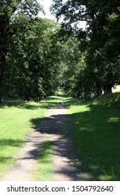Long View. Country path straight through a forest of huge old oak trees in northern England.