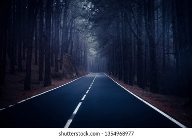 Long way road  at the mountain with pines forest and fog clouds in front and grey clear sky - ground point of view with black asphalt and white lines - driving and travel concept