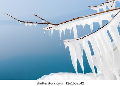 Long white icicles hanging on frozen branches on a sunny lakeside