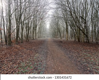 A long wide footpath between rows of bare frost laden treens on a cold and misty day.