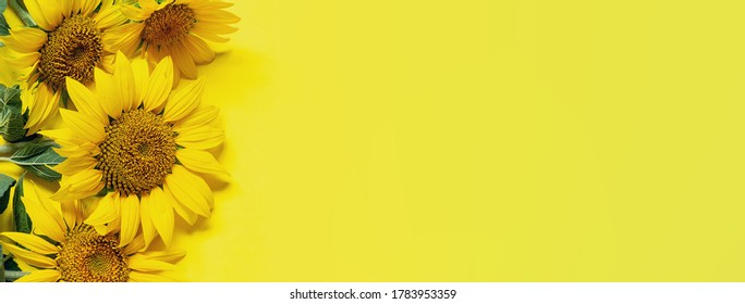 Long wide summer banner with yellow sunflowers on bright yellow background. Bright greeting card template.