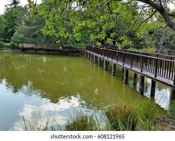 a long Wood bridge in the park
