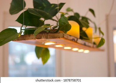Long wooden pendant lamp (ceiling lamp) with LED. On the top of the lamp there is a green plant and candles. Bright room, windows.