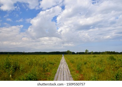 Long wooden plank walkway or road leading through meadows, fields, and pasturelands with a dense forest or moor in the background with two people walking along the way on a cloudy summer day in Poland
