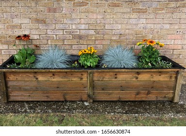 Long wooden tub raised bed planted with blue grasses and rudbeckia. Set obj a gravel path against a mellow brick wall