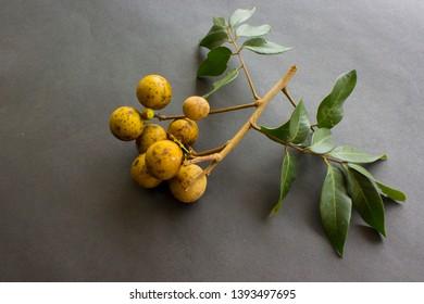 longan fruits. Fresh longan or kelengkeng isolate on black background