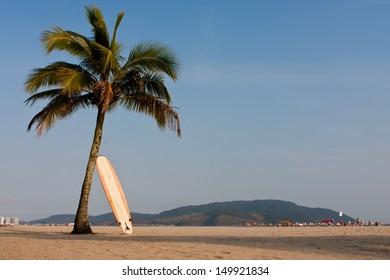Longboard resting on a coconut tree on the beach in Santos-Brazil