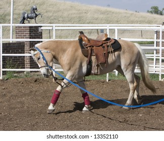 Longeing Horse