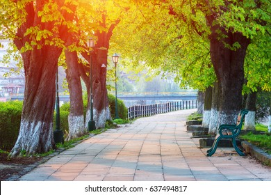 The longest in Europe linden alley in Uzhhorod city. Delicate green foliage of early spring. Ukraine, Europe