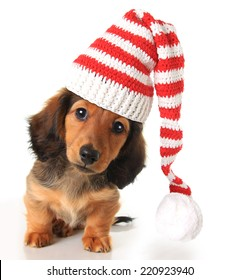 A Puppy For Christmas.Puppy Christmas Images Stock Photos Vectors Shutterstock