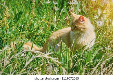 Long-haired Cat Seating in the Green Grass