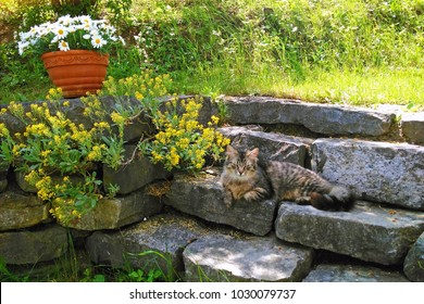 Long-haired tabby cat lying on stone stairs in garden, summer background with cute tomcat.