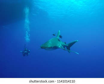 Longimanus shark patrolling at end of the dive at the surface during the safety stop, taken at the Daedalus reef in the Red Sea in Egypt