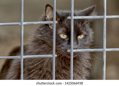Longing for Freedom. A black cat looking through a metal grid longing to be free.