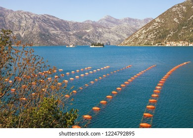 Longline culture ( rope culture ) mussel farm.  Montenegro, Adriatic Sea, Bay of Kotor