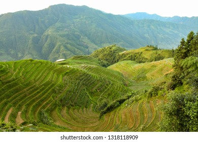 Longsheng rice terraces landscape in Guilin China