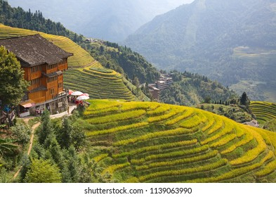 The Longsheng Rice Terraces(Dragon's Backbone) also known as Longji Rice Terraces are located in Longsheng County, about 100 kilometres (62 mi) from Guilin, Guangxi, China