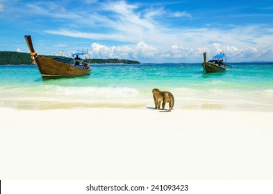 Longtail boat and monkeys waiting for food in Monkey Beach, Phi Phi Islands, Thailand