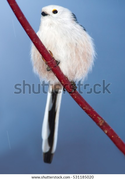 Long-tailed tit,Aegithalos caudatus. Vertical photo of white-headed subspecies perched on red twig against blue sky in background. Winter, Europe.
