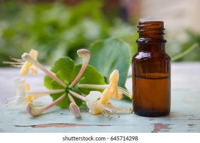 lonicera caprifolium, honeysuckle flower essential oil bottle on wooden background