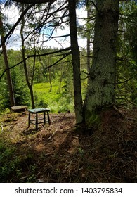 A lonley chair in the woods
