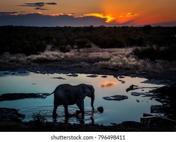 Lonley elephant enjoying the cool water of a waterhole during an amazing african sunset in Etosha-Nationalpark