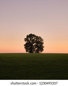 lonley hill tree