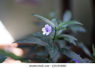 Lonley Purple Flower