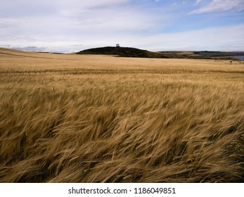 Lonley Scottish Field