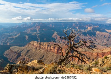Lonley tree above South Rim of Grand Canyon, Arizona, United States