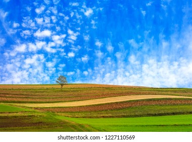 Lonley tree in the fields with a cloudscape