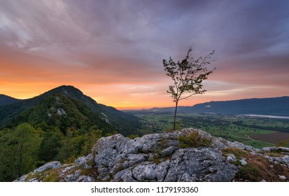 Lonley tree in the mountains at sunrise