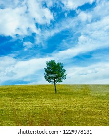Lonley tree on field