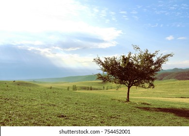 Lonley tree on green grass hills