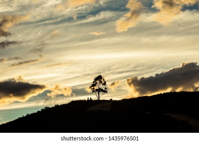 Lonley tree on hill with silhouettethe at the colorful of sky in evening