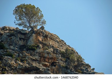A lonley tree on the top of a rock, found in Mallorca, Baleares, Spain, Europe, a bottom up view
