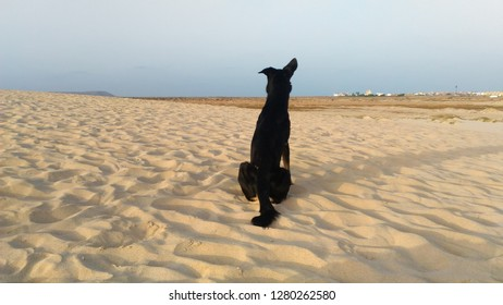 lonly dog at the beach