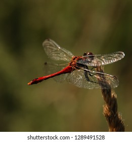 Lonly dragonfly in the wild nature