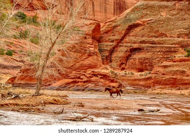 The lonly stallion in Canyon de Chelly.Livestock roams the canyon freely.Chinle, Arizona is the nearest town.4 April 2014 - Image