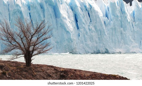 A lonly tree with a white background of ice