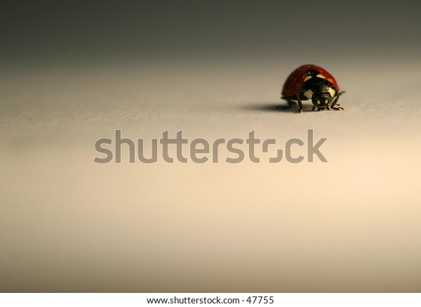 A lonsome Ladybird or Ladybug as you Americans call it!