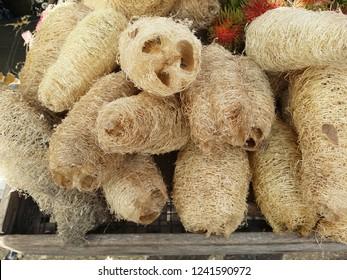 loofah sponge husks