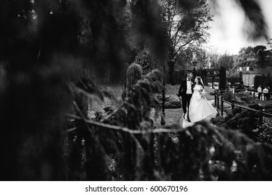 Look from behind the tree at cheerful newlyweds walking in the park