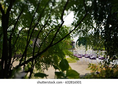 Look from behind the trees at violet chairs standing before wedding altar
