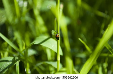look closer at small insect