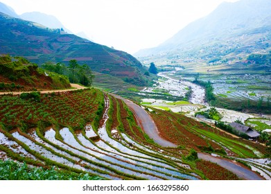 Look down a beautiful valley with many terraced rice fields, in Lao Cai Province, Vietnam.