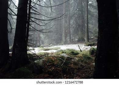 Look at a forest clearing of a dark forest