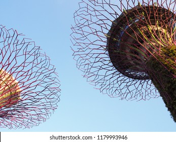 Look up high view of Twin Supertree Grove with the Skyway at Gardens by the Bay, Singapore city, Singapore