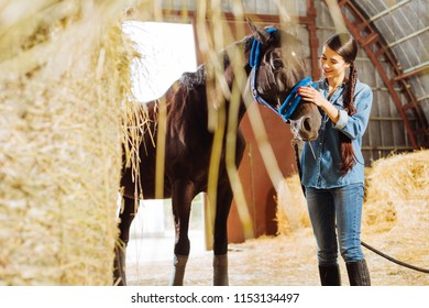 Look at horse. Beautiful appealing horsewoman with long dark braid looking at her dark racing horse