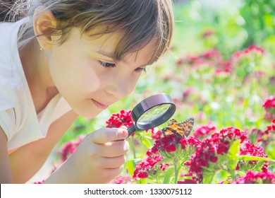 look in a magnifying glass butterfly sits on flowers. selective focus.